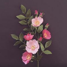 Alberta wild rose. #NectarHollow #handmade #paperart #paperflowers #paperflowerbouquet #albertawildrose #crepepaper #papermart