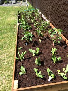 Garden Paths, Outdoor Structures, Plants, Gardening, Vegetable Garden, Lawn And Garden, Plant, Planets, Horticulture