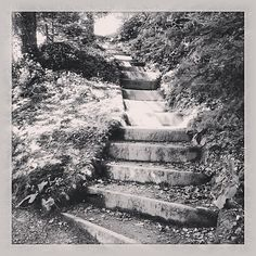 black and white stairs in an english coastal garden #photo #blackandwhite #stairs