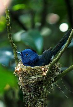 #bird #animal #blue