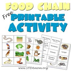 Food Chain Activity: Free Printable 32 cards from STEMmom.org .... Includes idea for writing on the table!