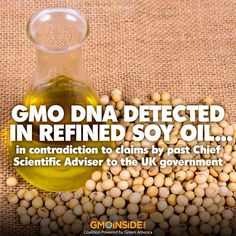 Monitoring genetically modified soybean along the industrial soybean oil extraction and refining processes by polymerase chain reaction techniques -- 2010 study showing there's detectable GM DNA in refined soy oil. More here: http://www.gmwatch.eu/latest-listing/1-news-items/12611 #GMOs #DNA #soy