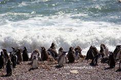 Valdes Peninsula-Argentina-Pinguini di Magellano  http://sandramaccaferri.blogspot.it/2011/08/il-giro-del-mondo-in-dieci-foto-2.html