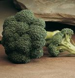 Broccoli Arcadia, Brassica oleracea (italica group) 100 Hybrid Seeds by David's Garden Seeds. Delicious and one of David's personal favorites. Broccoli is his favorite vegetable.