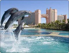 Love the Dolphins in Bahamas