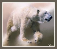 Polar Bear by Paul Miners, a wallpaper wall mural from Magic Murals. Bear Paintings, Wildlife Paintings, Wildlife Art, White Polar Bear, Polar Bears, White Bears, Polar Bear Illustration, Love Bear, Stretched Canvas Prints