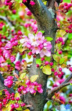 ดอกไม้ ต้นไม้
