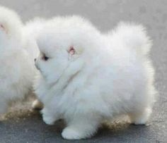 If i ever had a puppy i would get one like this! too cute