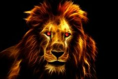 Lion, King, Africa, Animal