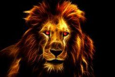 Lion, Leijona, King, Afrikka, Eläinten