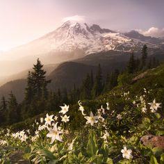 Mountain Rainer, Washington