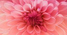 Just Pinned to Flowers: Ombre Flower http://ift.tt/1LlefqX http://ift.tt/2pK5iVC