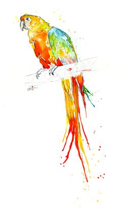 Macaw Parrot Studies by Amy Holliday, via Behance