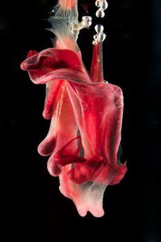 """Ripple"" menstrual blood art by Jen Lewis Blood Art, Black Garden, Feminist Art, Altars, Good Times, The Darkest, Artworks, Gardens, Fun"