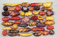 30 weird potatoes: what a strange family!