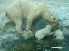Moeder ijsbeer met haar jongen - YouTube Polar Bear, Montessori, Youtube, Polar Bears, Animals, Guys, Youtubers, Youtube Movies