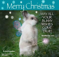 May all your bunny wishes come true this Christmas  www.best4bunny.com