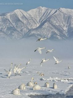 Spread your tiny wings and fly away, and take the snow back with you where it came from on that day... Snowbird