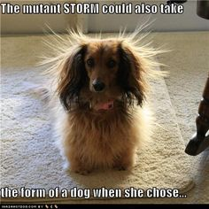 Bad hair day, and lots of it....my first dachsie looked just like this one...his name was Dorg....wierd name....wierd dog....wierd owner....