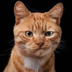 """allanimalsunited: """" Lovely cat """""""