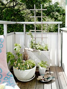 Using pots and lattice work in the same color make an apartment balcony garden look cohesive, while the various textures provide variety and interest.