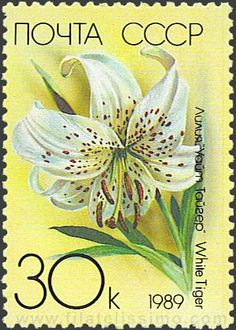 Lilium speciosum,  Japanese lily , White tiger. CCCP post stamp 1989