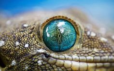 Crocodile Eye - Pixdaus