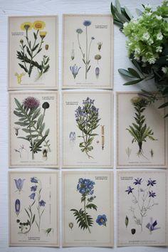 powder~Cards~まるでアンティークの植物図鑑から飛び出したような  お花のカード、8種類(8枚)のセットです。  種子やお花の断面図など、手書きの繊細なタッチの絵で1枚のカードに。  フレームに入れて飾ってもいいし、そのまま壁にペタペタ貼っても素敵。  ラッピングに添えてもいいですね。  もちろんハガキとしてもお使いになれます。  お花の種類は...ゴールドカラー、糸沙参、ヤブツバキ、ヒエン草、ヤグルマギクマツムシソウ  カノコソウ、アザミ、リンドウ、の8種類です。  1枚ずつ入った8枚のセットです。