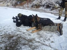 If you don't have one, you don't understand the loyalty of a GSD Law Enforcement Today www.lawenforcementtoday.com