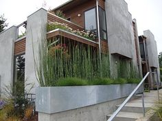love these low planter boxes and how the landscaping compliments the architecture so well