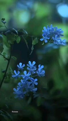 Dark Art Photography, Nature Photography Flowers, Aesthetic Photography Nature, Cool Pictures Of Nature, Beautiful Photos Of Nature, Cute Love Pictures, Bee Pictures, Blue Flower Wallpaper, Spring Wallpaper