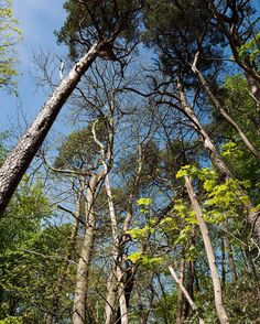 Forest Hill #nature #wandering #forest #tree #foret #arbre #explore #landscape #instashot #instagood #instadaily #leica #leicaq #madeinwetzlar #summilux
