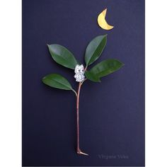Bonne nuit !  Good Night !  #flowleaf2015 #autumn #fall #automne #leaves #fallinspiration #feuillesdautomne #drawing #illustration #owl #hibou #bonnenuit #goodnight