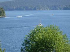 busy afternoon on the water.. Coal Harbour (Vancouver Island) BC