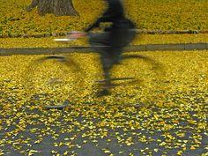 Yellow fall leaves + bicycle swirl + art photo..Sul giallo…