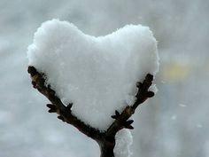Herzen bild 7