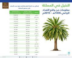 النخيل في المملكة العربية السعودية