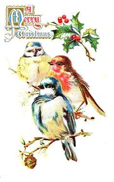 vintage Christmas three birds on branch