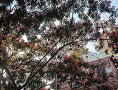 Rosé. #neworleans #frenchquarter #frenchmenstreet by tonycoslett