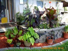 gardening_wi's media