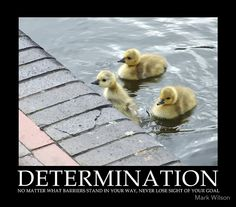 Determination.  No matter what barriers stand in your way, never lose site of your goal.