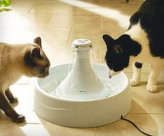 Dishes, Feeders & Fountains Cat Supplies Fresh Water Drinking Fountain For Cats And Small Dogs Bowl Elegant And Sturdy Package