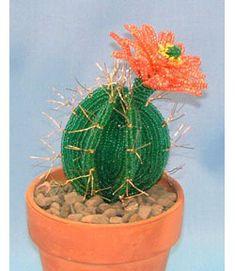 Flowering Cactus, Sova Enterprises
