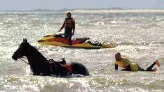 Lifeguard redt paard uit zee op 14 augustus 2014. Ameland TV
