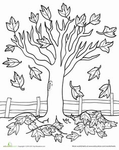 Fall Kindergarten Nature Worksheets: Maple Tree Coloring Page Worksheet