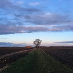 December 8 #treetwoproject the haystack looking like Ayers Rock