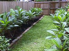 Burying or Plunging Plumeria in the Ground Tropical Backyard, Tropical Landscaping, Backyard Landscaping, Landscaping Ideas, Garden Trees, Lawn And Garden, Garden Gate, Exotic Plants, Tropical Plants