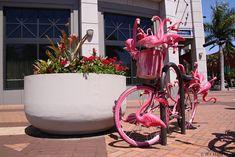 Sarasota Daily Photo: Flamingo Bike {EDL}