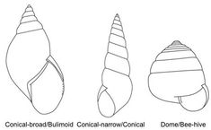How to Identify Terrestrial Gastropods