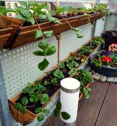 DIY strawberry planter